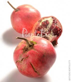 Catalogo piante da frutto biologiche vendita online for Piante da frutto online